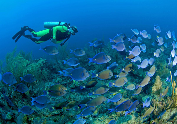 buceo2