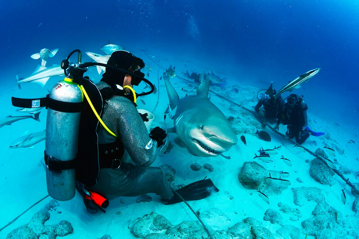 Riviera Maya the best destination for diving in Mexico